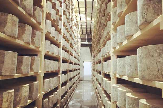 westcombe-dairy-cheese-cave-1